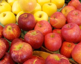 品種の宝庫! 色んなリンゴを食べ比べてみてください。