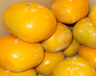 栄養素の宝庫 あま~く、ジュ~シ~ 種なし柿